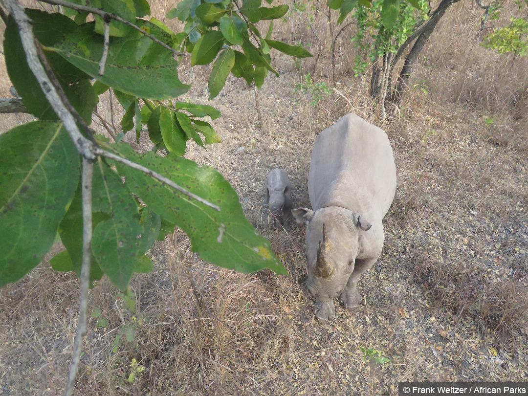 WWF rhino 01
